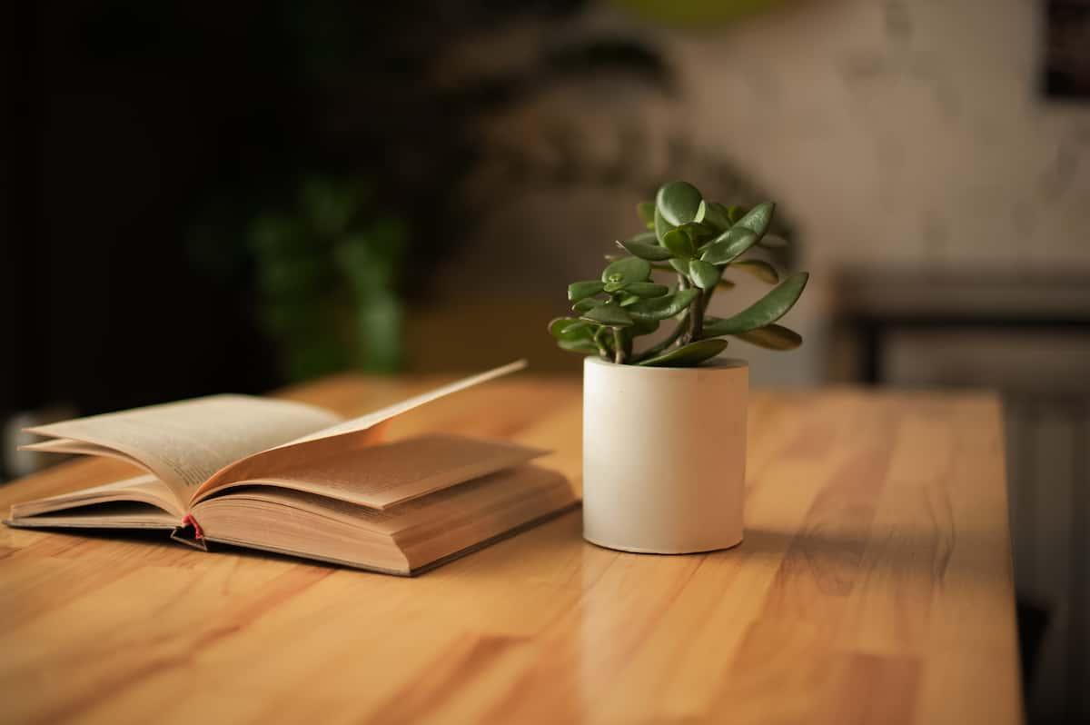 カフェで参考書籍を読む