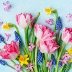 たくさんの綺麗な花々