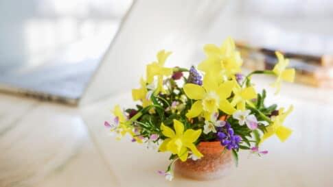 お花の定期便でお家を素敵にグレードアップする