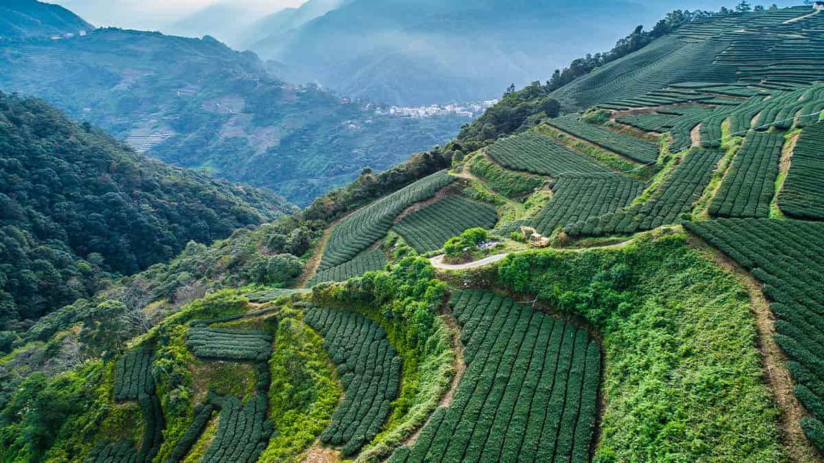 台湾茶を飲むときに便利なアイテムを紹介する